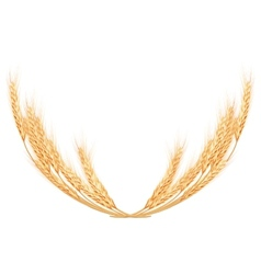 Wheat spikes on white template EPS 10 vector image