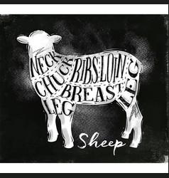 sheep lamb cutting scheme chalk vector image
