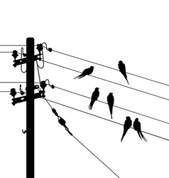 Birds migration white black vector image