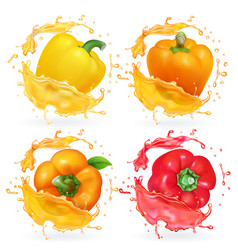 Colored yellow red orange bulgarian peppers vector