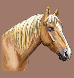 colorful hand drawing horse portrait-7 vector image