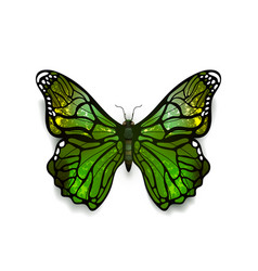 Green detailed realistic butterfly isolated vector