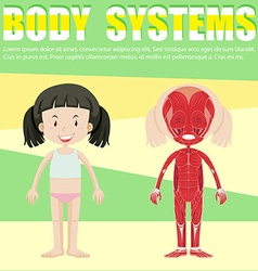 Infographic with girl and body system vector