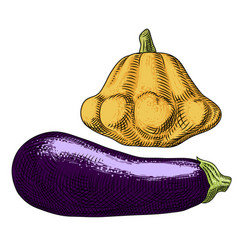 Yellow squash and eggplant on a white background vector