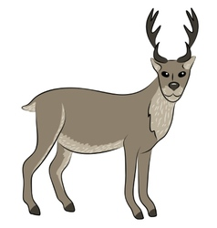 young wild deer vector image