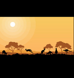beauty kangaroo on park scenery silhouettes vector image vector image