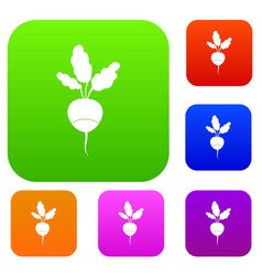 fresh radish set collection vector image vector image