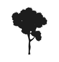 silhouette tree plant natural design image vector image