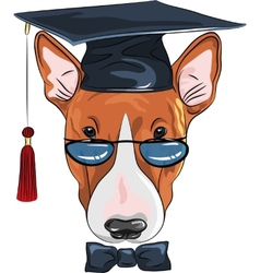 funny graduated dog Bullterrier vector image vector image