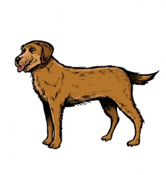 english setter vector image vector image