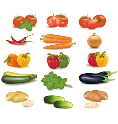 biggroup of vegetables vector image