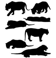 Collection of silhouettes of tigers vector image