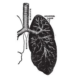 Respiratory mechanism vintage vector