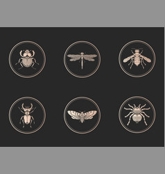 Set gold icons with insects on black vector