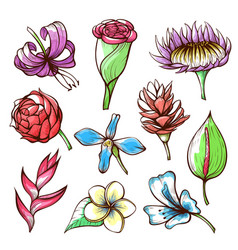 tropical flowers hand drawn vector image