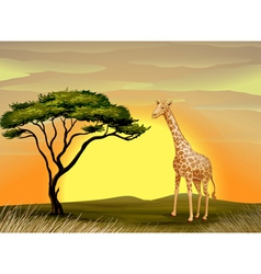 a giraffe under tree vector image vector image