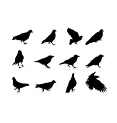 black and white silhouette dove crow isolated vector image