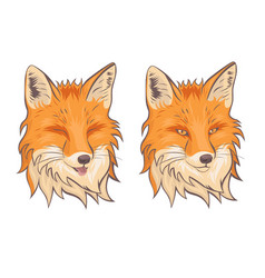 head fox isolate on a white background vector image