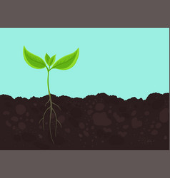 Seedling germination young plant shoot sprout on vector