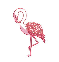 Silhouette beauty and exotic flamingo bird animal vector