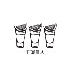 tequila glasses made in hand drawn style template vector image