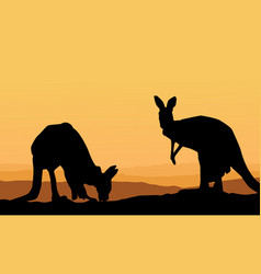 two kangaroo scenery silhouette collection vector image