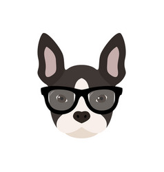 french bulldog with glasses cute vector image