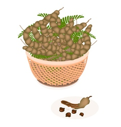 A Brown Basket of Fresh Tamarind Pod and Leaves vector image