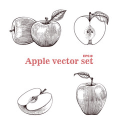 apple set hand drawing vector image