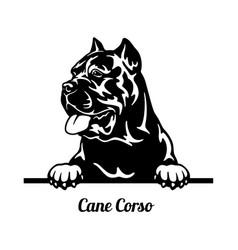 Cane corso peeking dog - head isolated on white vector
