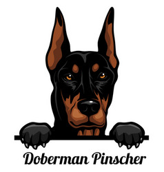 Doberman pinscher - color peeking dogs - breed vector