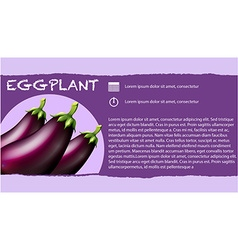 Fresh eggplants and text design vector image