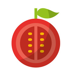 Tomato half fresh vegetable isolated icon vector