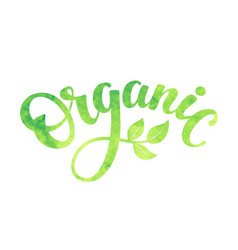 Word organic with green leaves hand vector