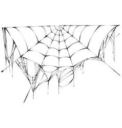 black spiderweb on white background vector image