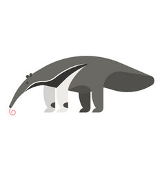 template flat style of anteater vector image vector image