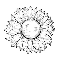 beautiful black and white sunflower isolated vector image