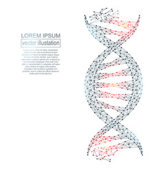 Polygonal dna abstract image low poly wireframe vector
