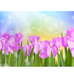 Spring Easter with beautiful violet tulips EPS 10 vector image