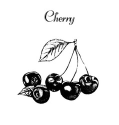 hand drawn vintage isolated cherry vector image vector image