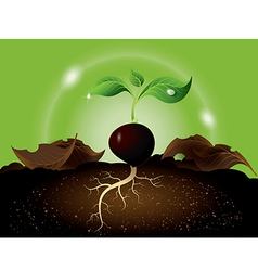 Green sprout growing from seed vector image vector image