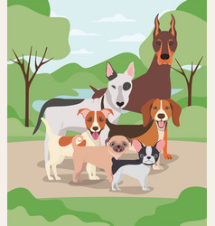 Group dogs pets in camp characters vector