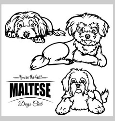 Maltese - set isolated on vector
