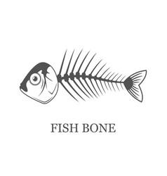 fish bone fish skeleton grey vector image