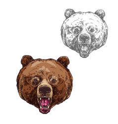 bear isolated sketch with head of wild grizzly vector image vector image