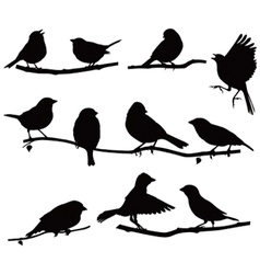 Silhouettes bird on a branch vector image