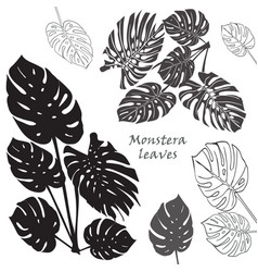 silhouette tropical monstera leaves black vector image vector image