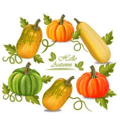 autumn colorful pumpkins frame fall season vector image