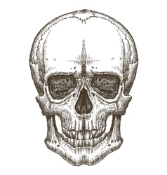 skull logo design template death disease vector image
