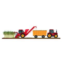 Sugar cane farming harvest vector